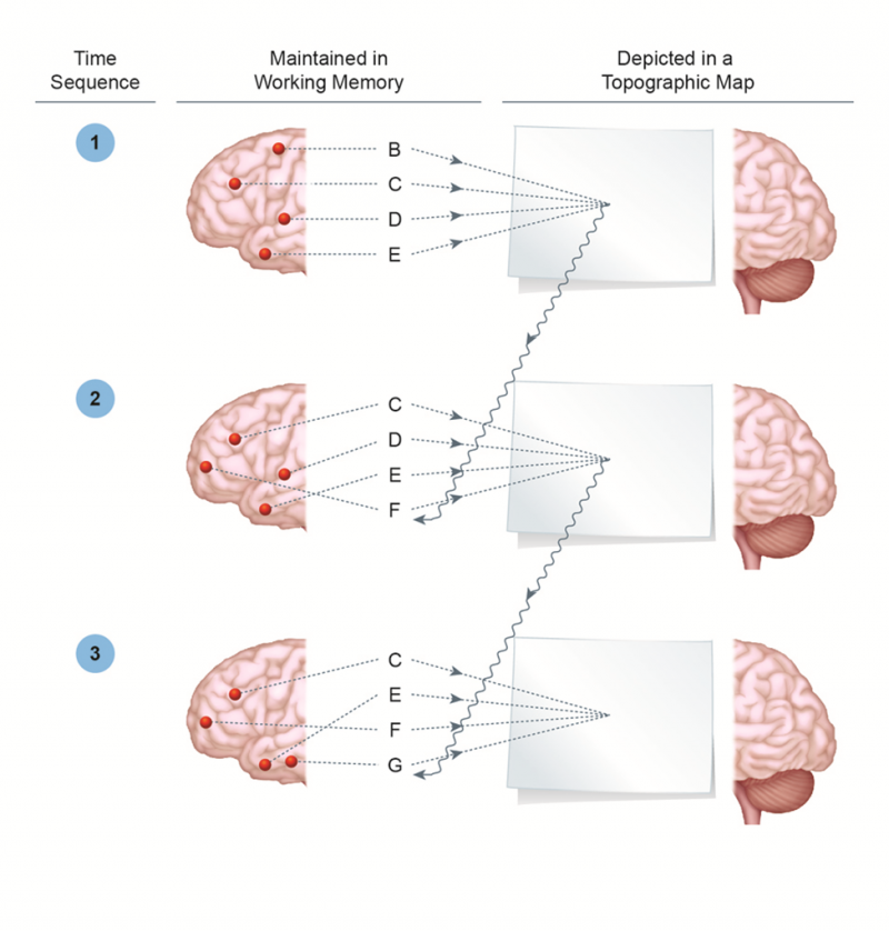 Working Memory Reciprocations